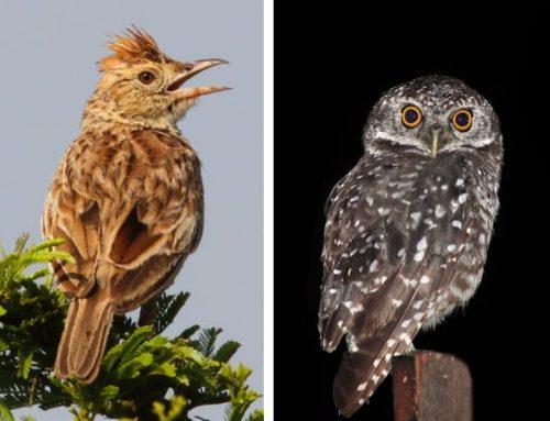 Morning Lark or Night Owl