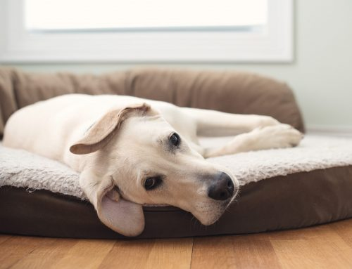 Practical Advice on Choosing a Dog Bed